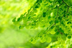 新緑の写真素材 [FYI01577588]