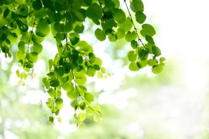 新緑の写真素材 [FYI01578799]