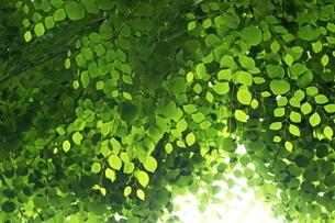 新緑の写真素材 [FYI01579793]