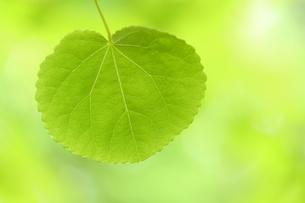 新緑の写真素材 [FYI01579953]