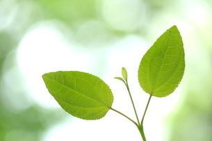新緑の写真素材 [FYI01580102]