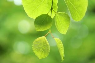 新緑の写真素材 [FYI01580364]