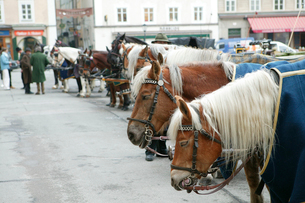 ザルツブルグの観光馬車の写真素材 [FYI01580374]