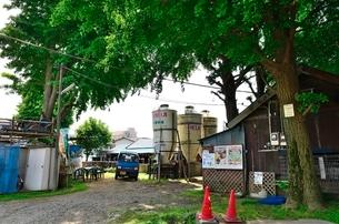 23区内に健在の牧場小泉牧場の写真素材 [FYI01580784]