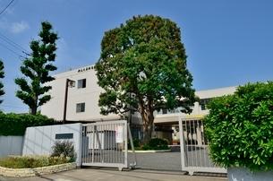 東京都立大泉桜高等学校の写真素材 [FYI01580802]