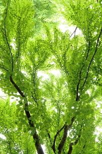 新緑の写真素材 [FYI01581815]