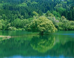 蛇ヶ池と1本の木の写真素材 [FYI01581896]