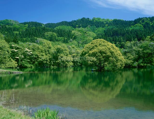 蛇ヶ池と1本の木の写真素材 [FYI01581926]