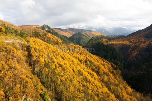 カラマツの紅葉 御岳パノラマラインの写真素材 [FYI01582146]
