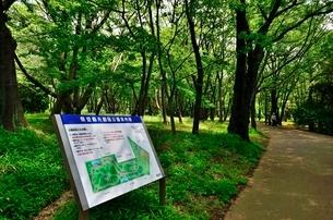 県営和光樹林公園の写真素材 [FYI01582174]