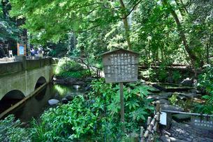 井の頭恩賜公園お茶の水の写真素材 [FYI01582250]