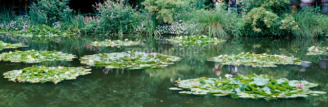 モネ睡蓮の庭園の写真素材 [FYI01582362]