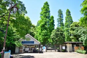 井の頭恩賜公園井の頭自然文化園の写真素材 [FYI01582501]
