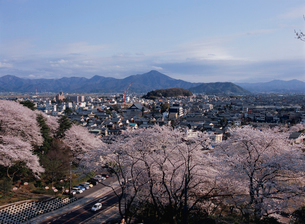 西山公園の桜と鯖江の町並の写真素材 [FYI01582608]