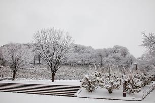 冬の西山公園の写真素材 [FYI01583200]