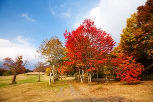 奥大山の秋の写真素材 [FYI01583316]