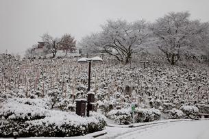 冬の西山公園の写真素材 [FYI01583443]