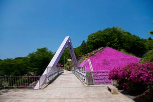 西山公園 芝桜 西山橋の写真素材 [FYI01583795]