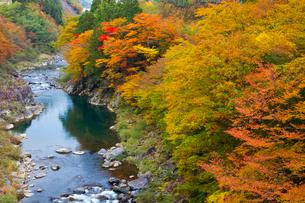 飛騨川の紅葉の写真素材 [FYI01583825]