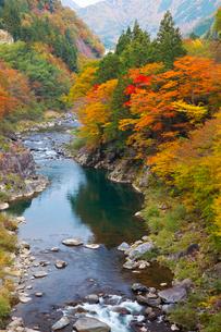 飛騨川の紅葉の写真素材 [FYI01583852]