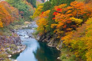 飛騨川の紅葉の写真素材 [FYI01583871]