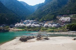 飛騨川と桜の写真素材 [FYI01583904]