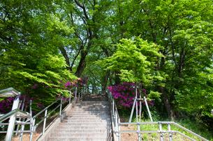 西山公園のツツジの写真素材 [FYI01583945]
