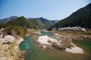 飛騨川と桜の写真素材 [FYI01583968]