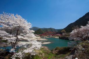 飛騨川と桜の写真素材 [FYI01584276]