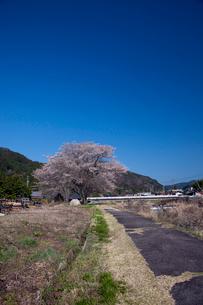川上川と桜の写真素材 [FYI01584292]