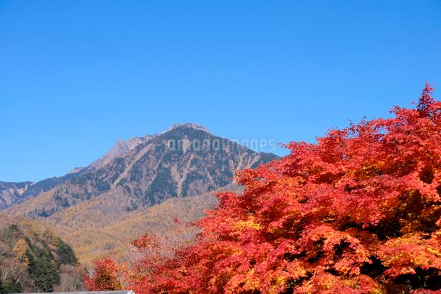 紅葉と八ヶ岳の写真素材 [FYI01584355]