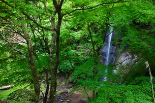蹄の滝の写真素材 [FYI01584390]
