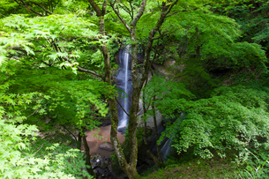 蹄の滝の写真素材 [FYI01584481]