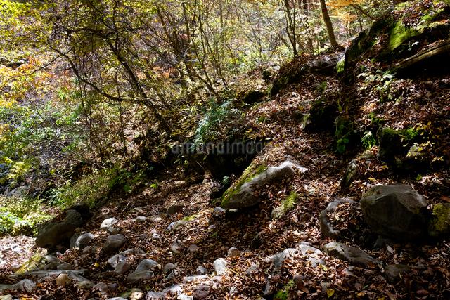 登山道の写真素材 [FYI01584696]