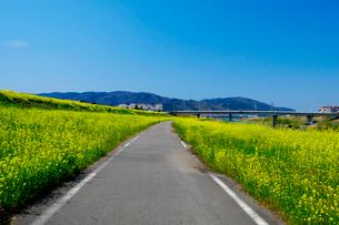 菜の花と道の写真素材 [FYI01584985]