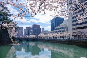 福井県庁お堀と桜の写真素材 [FYI01584989]