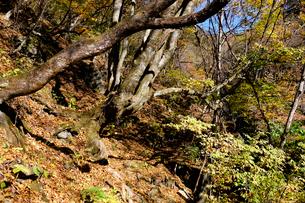 登山道の写真素材 [FYI01585072]