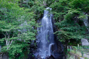 駒ケ滝の写真素材 [FYI01585308]