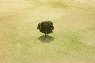 芝生と木の写真素材 [FYI01585434]