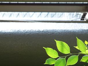 緑の葉と陽の差す窓の写真素材 [FYI01585438]