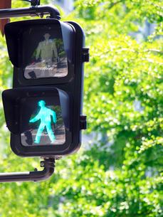 青信号と新緑の写真素材 [FYI01585448]