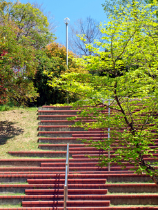 新緑の公園の写真素材 [FYI01585473]