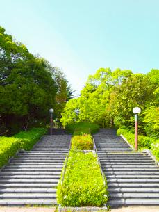 緑の木々と二つの階段の写真素材 [FYI01585486]
