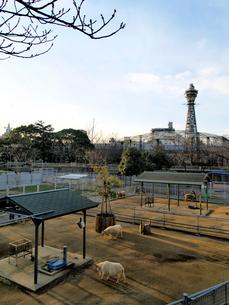 天王寺動物園と通天閣の写真素材 [FYI01585493]
