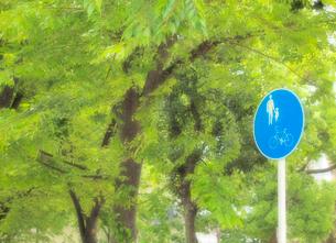 新緑と標識の写真素材 [FYI01585495]