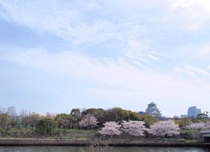 大阪城と桜の写真素材 [FYI01585498]