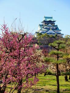梅の花と大阪城の写真素材 [FYI01585505]
