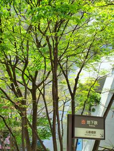 新緑と地下鉄心斎橋駅の写真素材 [FYI01585518]