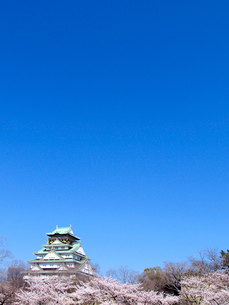 大阪城と桜の写真素材 [FYI01585542]