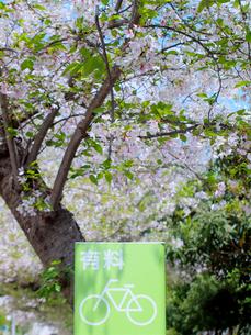 グリーンの駐輪場の案内板と桜の写真素材 [FYI01585595]